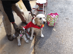 Belle and Kiwi in Christmas Parade Regalia