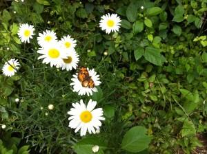 Butterfly on my walk