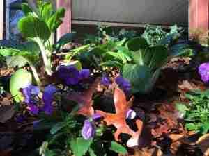 My Organic Garden